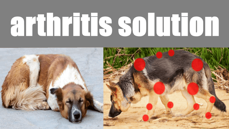 Arthritis in dogs What is and solution