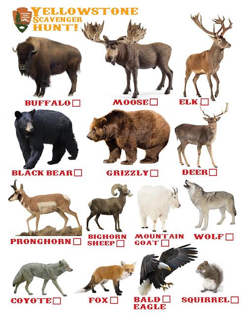 Yellowstone Scavenger Hunt, Yellowstone Animal Check List, Yellowstone, Yellowstone Animal
