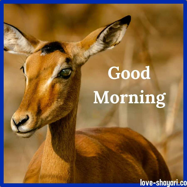 good morning ki photo