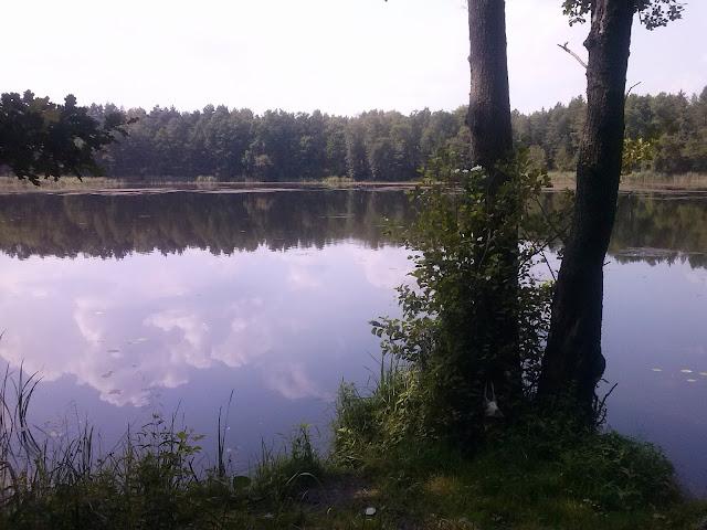 Jezioro Lubach (Lubartynia, Tarcza) - Szklarka Radnicka