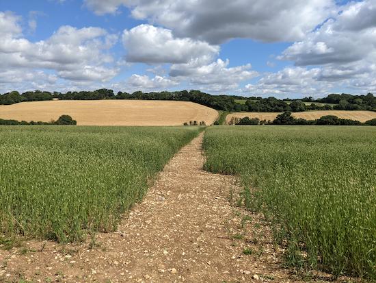 Kings Walden footpath 4 crossing the crop