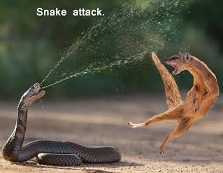பாம்பு விஷம் - ஒரு அறிமுகம் - An Introduction to Snake Venom.