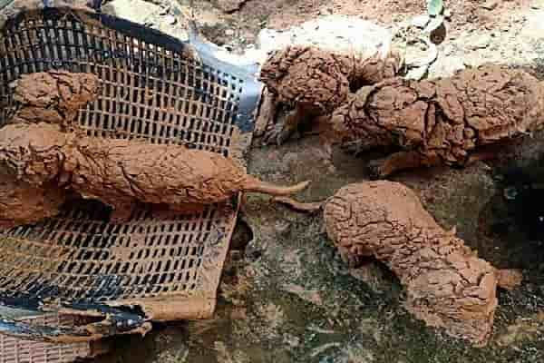 Man Rescues Muddy Puppies From A Well And Then He Cleaned The Mud Away