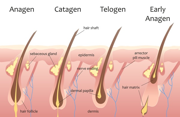 best hair elimination,  techniques ,  get rid of unwanted hairs, hairs , beauty , best ways , Methods of hair , women , woman, girls, delecious , pure , Thick hairs , laser hair removal , laser hair ,