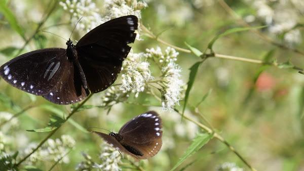 彰化迎接紫斑蝶三重送好禮 成功營區綠色環境學習營地登場