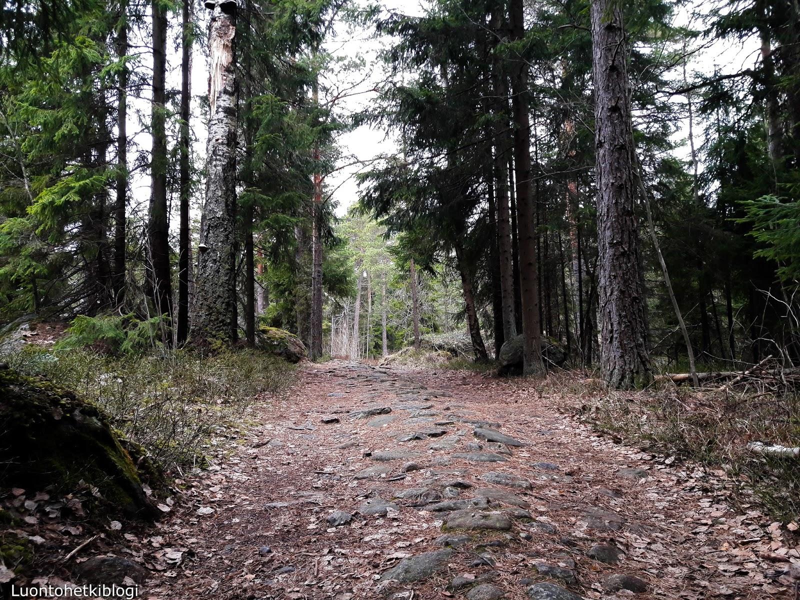 Luontohetkiblogi Mustavuori Metsan Lumoa Ja Historian Havinaa