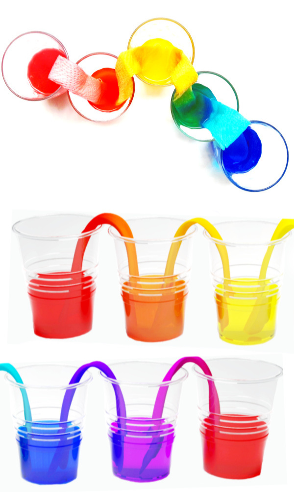 Make water walk with this easy and fun science experiment!  Kids will be in awe as they make a water rainbow right before their eyes! #walkingwaterexperiment #walkingwater #rainbowwater #rainbowwaterexperiment #rainbowwalkingwater #walkingwaterexperimentforkids #waterexperimentsforkids #walkingwaterrainbow #scienceexperimentskids #scienceforkids #growingajeweledrose