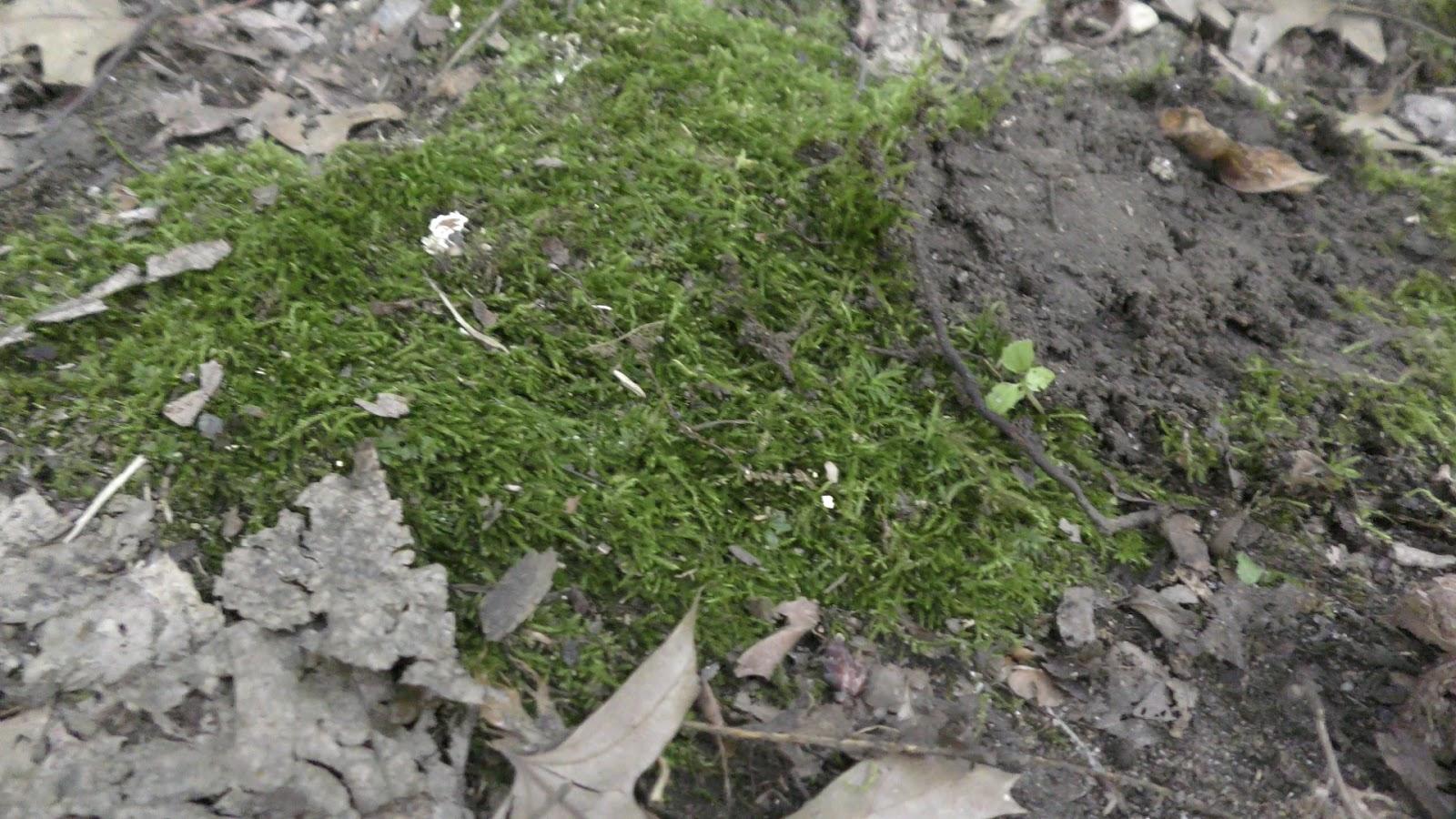 how to grow moss in aquarium