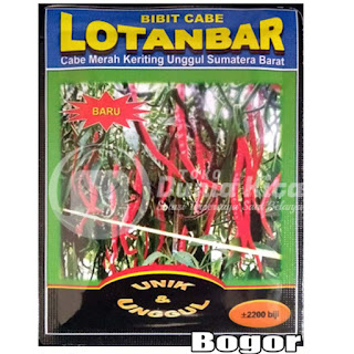 Benih Cabe Merah Keriting (TOLERAN VIRUS KUNING DAN ANTRAKNOSA) LOTANBAR