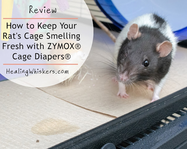 Review: How to Keep Your Rat's Cage Smelling Fresh with ZYMOX® Cage Diapers®