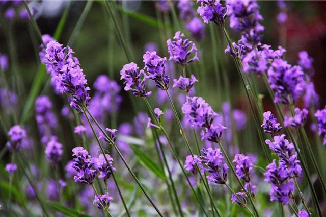 Bahan Naturral Tiidak Berarti Bebass Alergi
