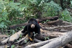 Tempat Tujuan Destinasi Wisata di kota Balikpapan Beruang Madu