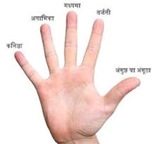 हाथ का प्रकार और अँगुलियों के फल   Ungliyo Ka Fal Hast Rekha