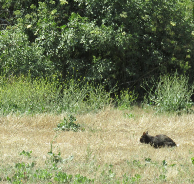 """""""Larry"""" Moore Park in Paso Robles: A Photographic Review - Lost Cat?"""