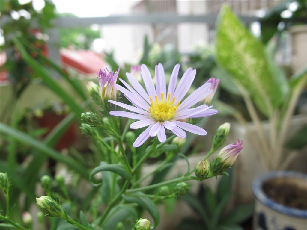 Bông hoa đầu tiên