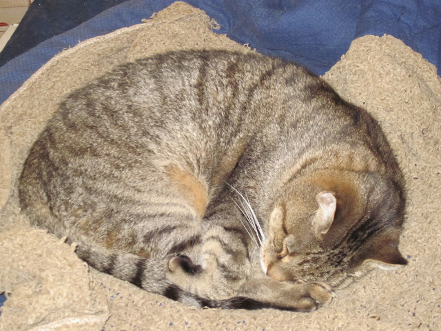A cat sound asleep curled up on a chenille blanket