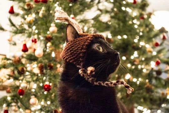 cat dressed-up for christmas