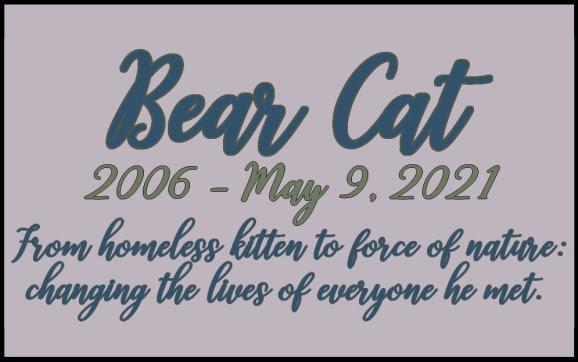 Bear Cat: 2006 -2021