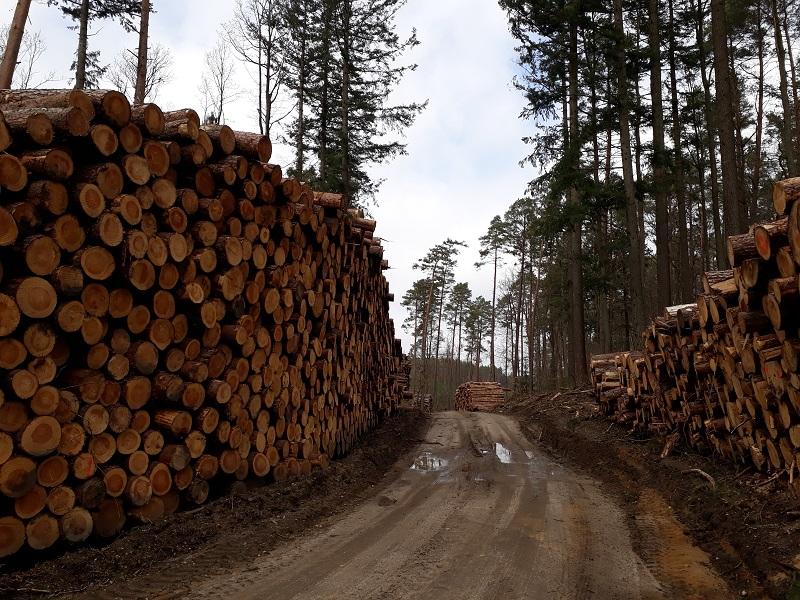 Travi di legname