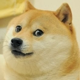 Sir Doge 300 Taken Roblox Roblox News Roblox Doge Takeoever