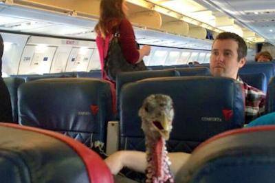 Peristiwa Paling Kocak yang Pernah Terjadi di Pesawat