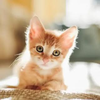 No adoptes un Gato cuando aún es muy pequeño