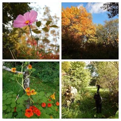veganer Garten im Herbst
