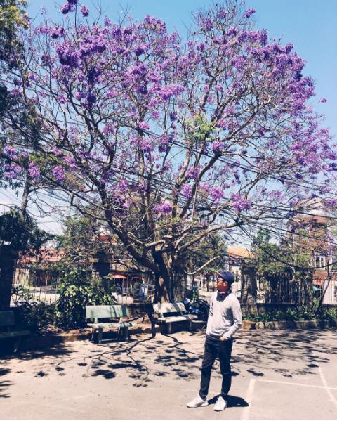 Check-in hoa phượng tím và hoa anh đào đẹp lung linh ở Đà Lạt