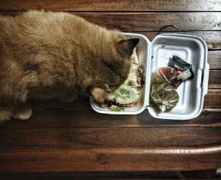 Makanan Yang Baik Untuk Kucing