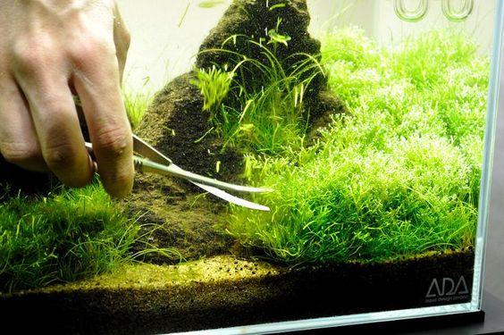 chơi hồ thủy sinh cần thường xuyên cắt tỉa