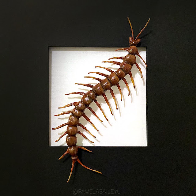 How many legs does a centipede have?