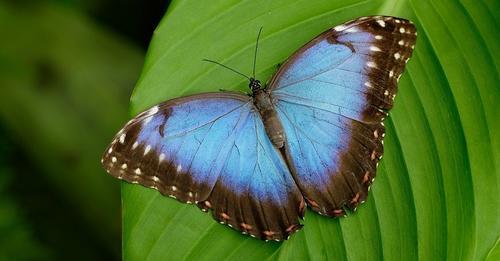 प्रकृति में नीला रंग आखिर क्यों दुर्लभ है, नीले रंग के जीव हमें क्यों नहीं दिखाई देते!
