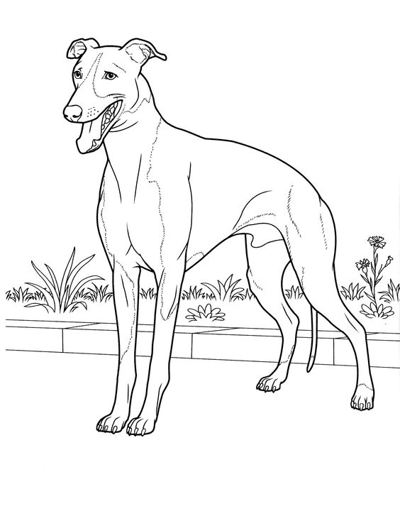 Dogs coloring pages 23