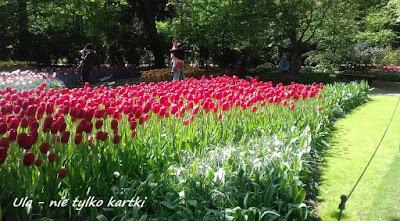 Królestwo tulipanów, czyli Holandia po raz drugi