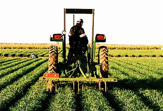 Mutianingsih Teknologi atau Sistem Pertanian di Negara