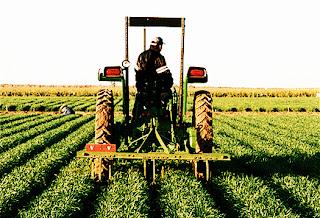 Teknologi dan Sistem Pertanian di Negara-Negara Maju