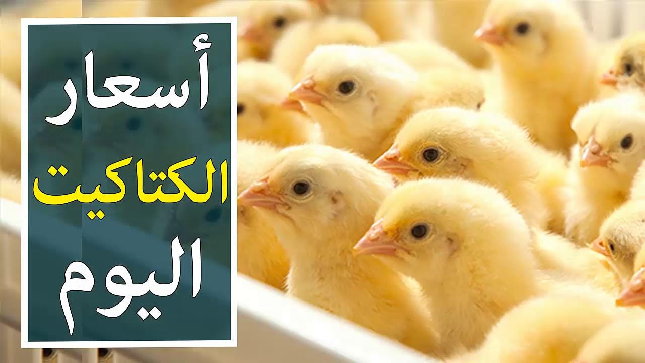 أسعار بورصة الكتاكيت اليوم في مصر 2020