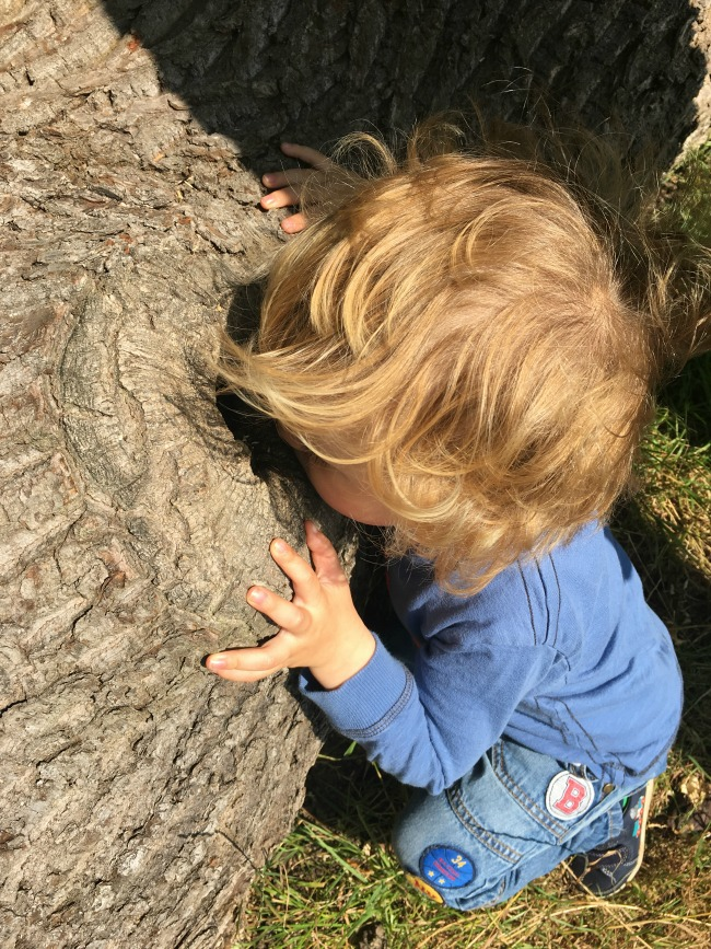 toddler-looking-in-hole-in-tree-stump