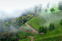 munnar-hill-station-in-india