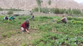 APEDA partnered with Ladakh Officials