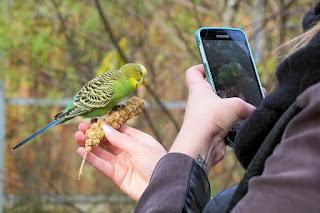 5 Aplikasi Suara Kicau Burung Terlengkap