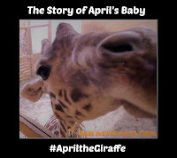 Close up of giraffe with title overlaid
