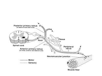 AMG: Neurologie si nursing în neurologie , 8 Sindromul de