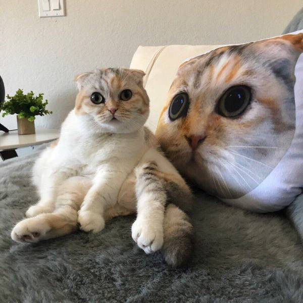 Funny cats - part 306, cute cat picture, cat image