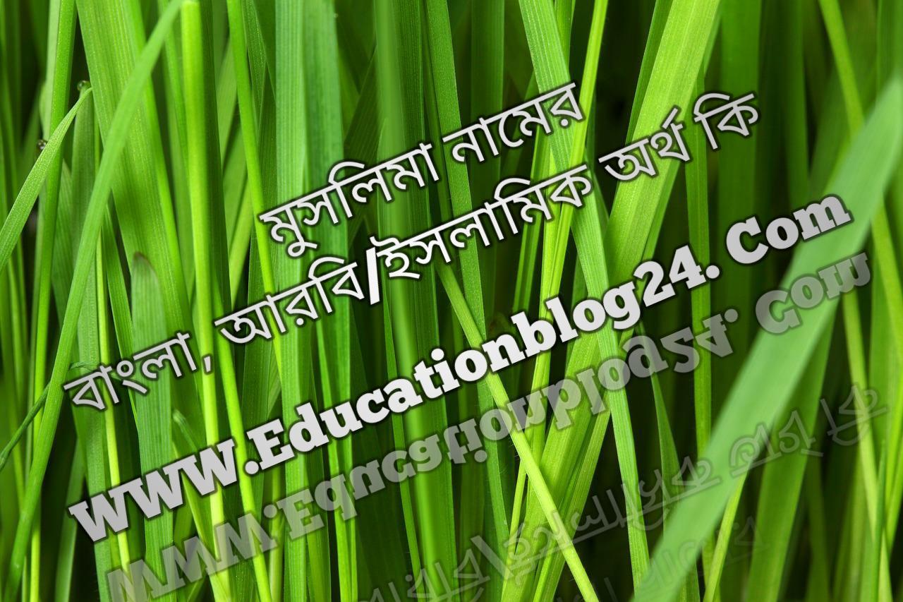 Muslima name meaning in Bengali, মুসলিমা নামের অর্থ কি, মুসলিমা নামের বাংলা অর্থ কি, মুসলিমা নামের ইসলামিক অর্থ কি, মুসলিমা কি ইসলামিক /আরবি নাম