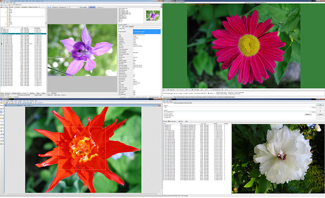 Descarca gratuit WildBit Viewer-Editor de imagini