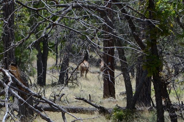 elk butts