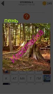 в лесу стоит пень с большими корнями 6 уровень 400+ слов 2