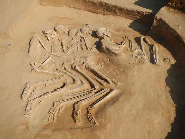 Five interlocked skeletons discovered in the UAE