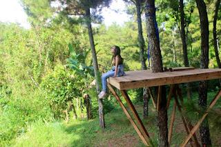 Beranda Pandang Wisata Hutan Pinus Songgon